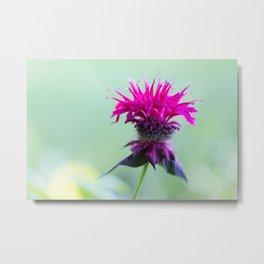 Pink Bee Balm Flower 2 Metal Print