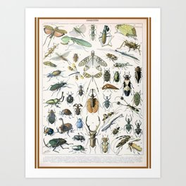 Adolphe Millot- Vintage Insect Print Art Print