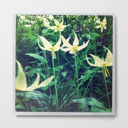 Fawn Lilly  Metal Print