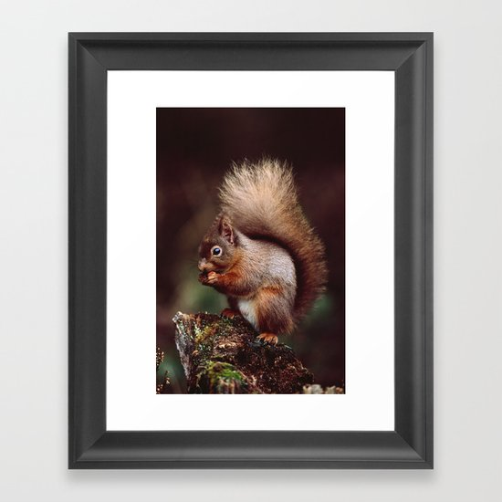 RED SQUIRREL. Framed Art Print