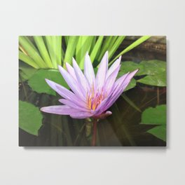 Lotus Expansion Metal Print