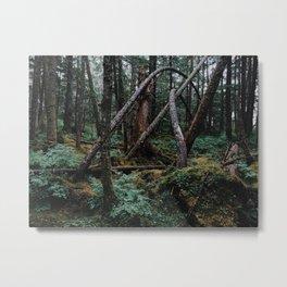 Twisted Trees, Forest, Haines, Alaska Metal Print