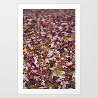 Autumn Leaves 3 Art Print