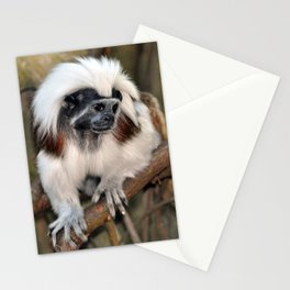 Cotton-top Tamarin Stationery Cards