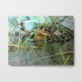 Frog Camouflaged in Water Metal Print