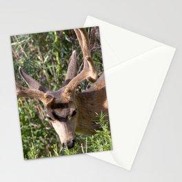 Watercolor Deer, Mule 17, Estes Park, Colorado, The Nibbler Stationery Cards