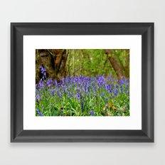 Bluebells Wood Framed Art Print