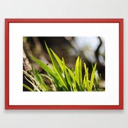 The Green Green Grass Framed Art Print
