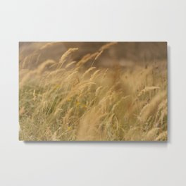 Blades of Grass in Sunset Metal Print