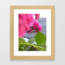Flowers after the rain Framed Art Print