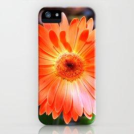 Orange Daisy iPhone Case