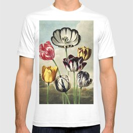 Tulips : Temple of Flora of New Illustration of the Sexual System T-shirt