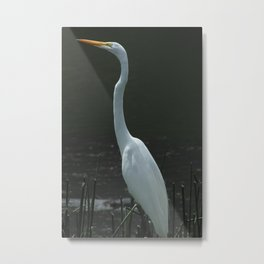 Great Heron Among Reeds Metal Print