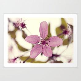 Pink blooming tree Art Print