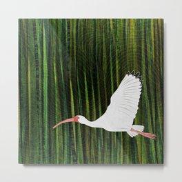 American White Ibis In Flight Metal Print