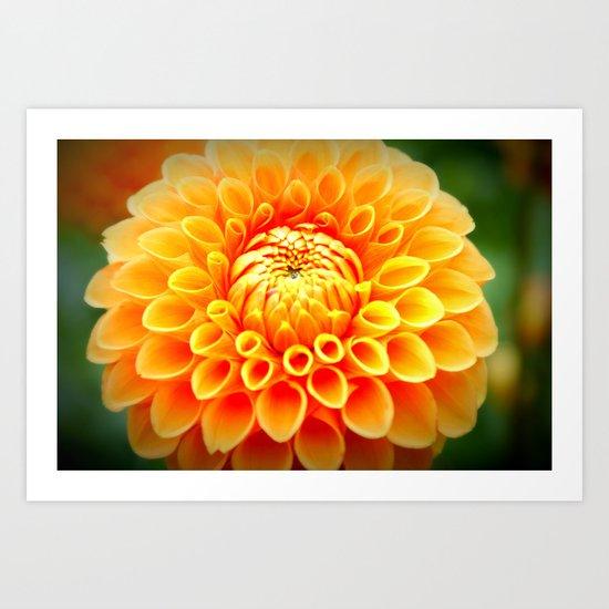 In Bloom! Art Print