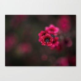 Red Tea Tree Flower Canvas Print