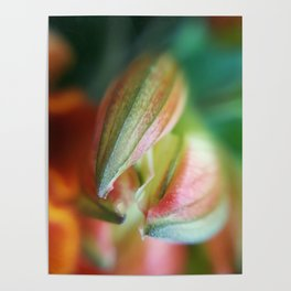 Spring - macroflower Poster