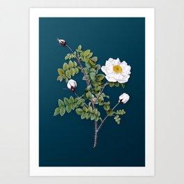 Vintage Flower White Burnet Roses Botanical on Teal Art Print