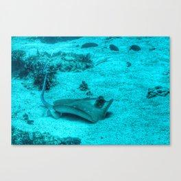 Sting ray taking a bath Canvas Print