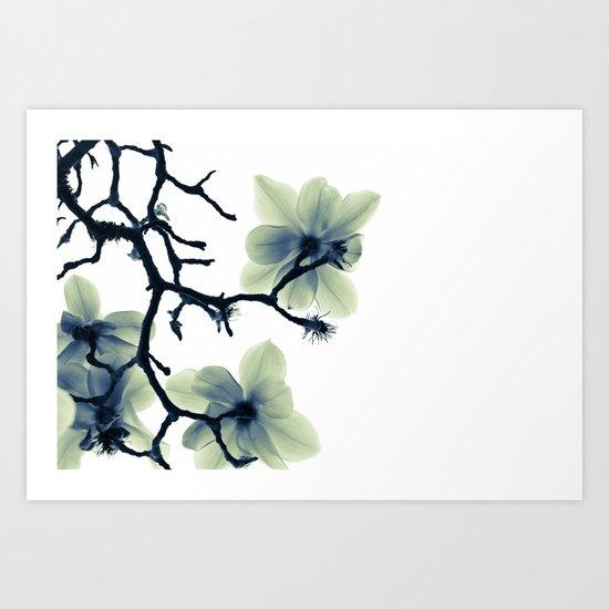 Translucence Art Print