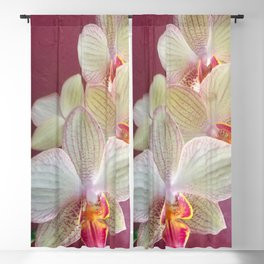 Pink Orchid Blackout Curtain