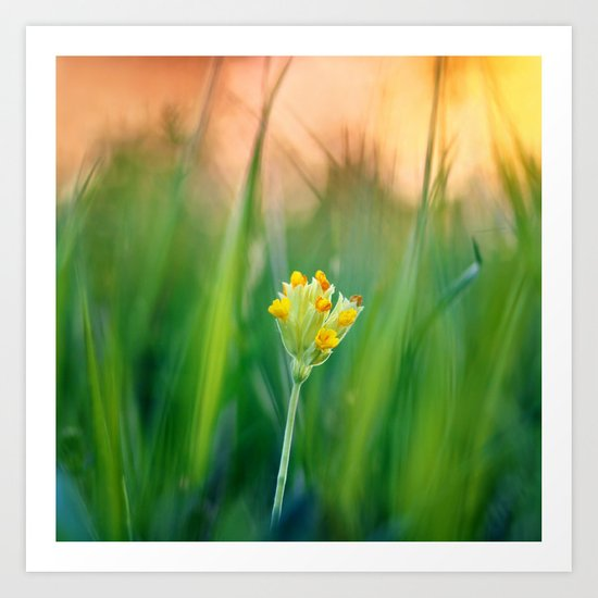 Morning beauty Art Print