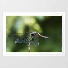 Fly, Dragon, Fly Art Print