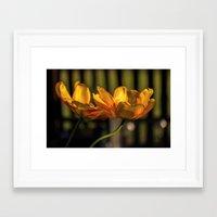 tulip Framed Art Prints featuring tulip by Karl-Heinz Lüpke