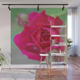 Fluid Nature - Budding Rose - Garden Photography Wall Mural