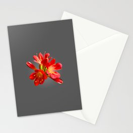 Red Natal Lily Stationery Cards