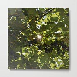 grapes in the sun Metal Print