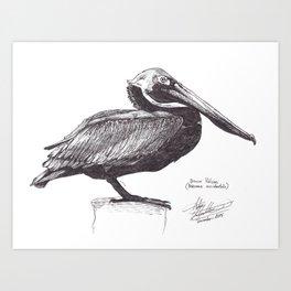 Brown Pelican (Pelecanus occidentalis) Art Print