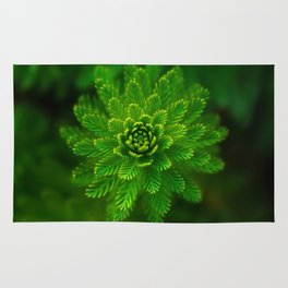Water plant-green Rug