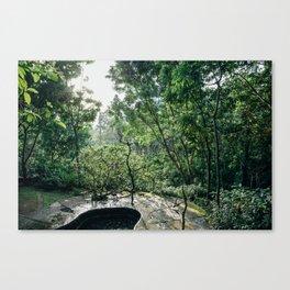 Ubud Forest , Bali Canvas Print