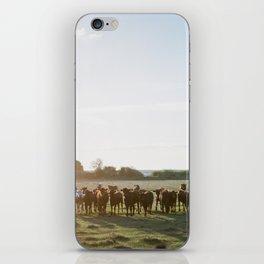 Curious Florida Cattle at Sunset - Florida Fine Art Film Photography iPhone Skin