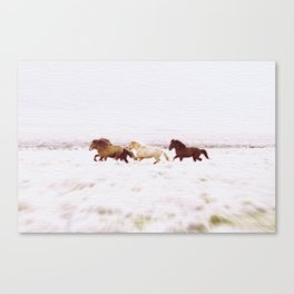 WILD AND FREE 5 - HORSES OF ICELAND Canvas Print