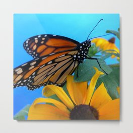 Monarch Butterfly on Black-Eyed Susan Metal Print