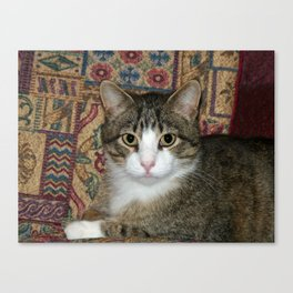 Handsome Fellow Canvas Print