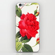 IX. Vintage Flowers Botanical Print by Pierre-Joseph Redouté - Red Rose iPhone & iPod Skin