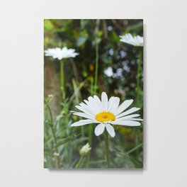 Daisy Flower - Plants Photography Metal Print