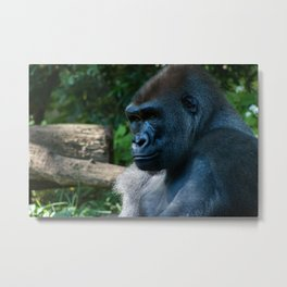 The Bronx Zoo II Metal Print
