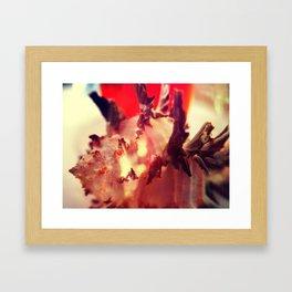 Murex Endivia 1 Framed Art Print