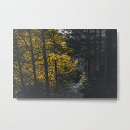 Landscape photo - forest in autumn Metal Print