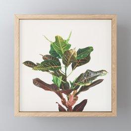 Croton Framed Mini Art Print
