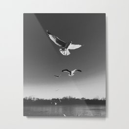 The Seagulls Above Merrimack Metal Print