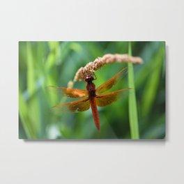 Beautiful Dragonfly Metal Print