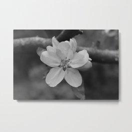 b&w apple blossom Metal Print