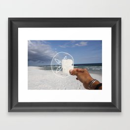 Sand Dollar Framed Art Print