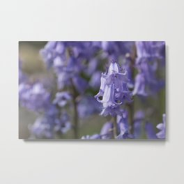 The Bluebell Patch Metal Print